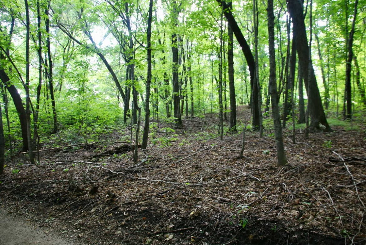 MN resorts for sale Kimp's Kamp wooded lot