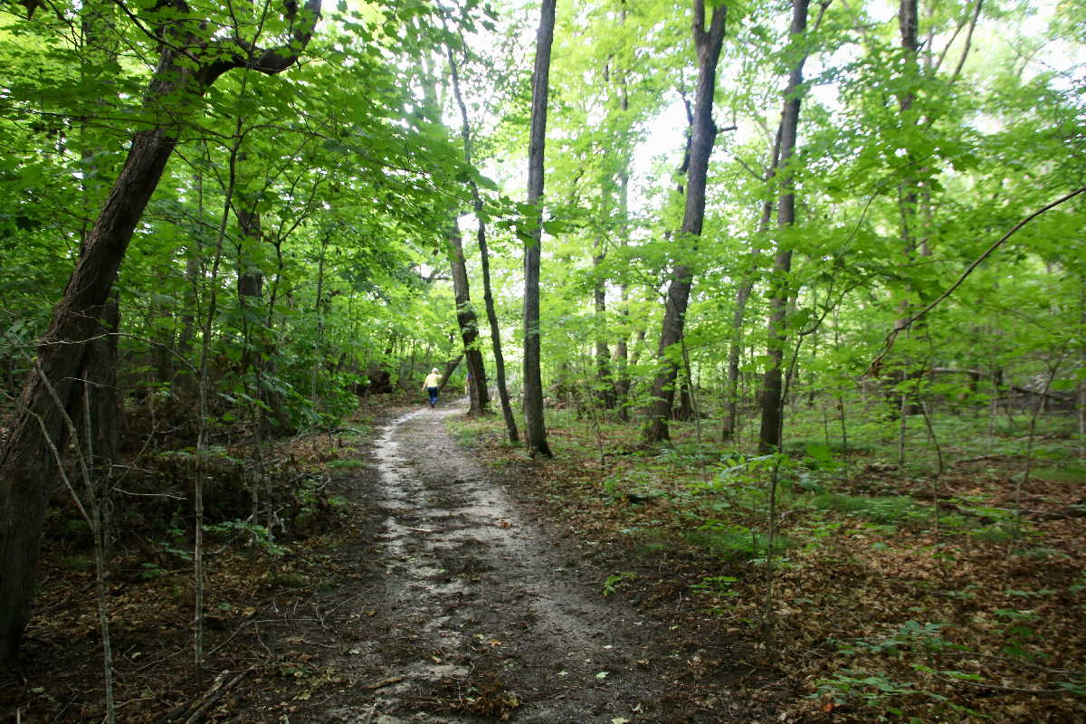 MN resorts for sale Kimp's Kamp shaded woods