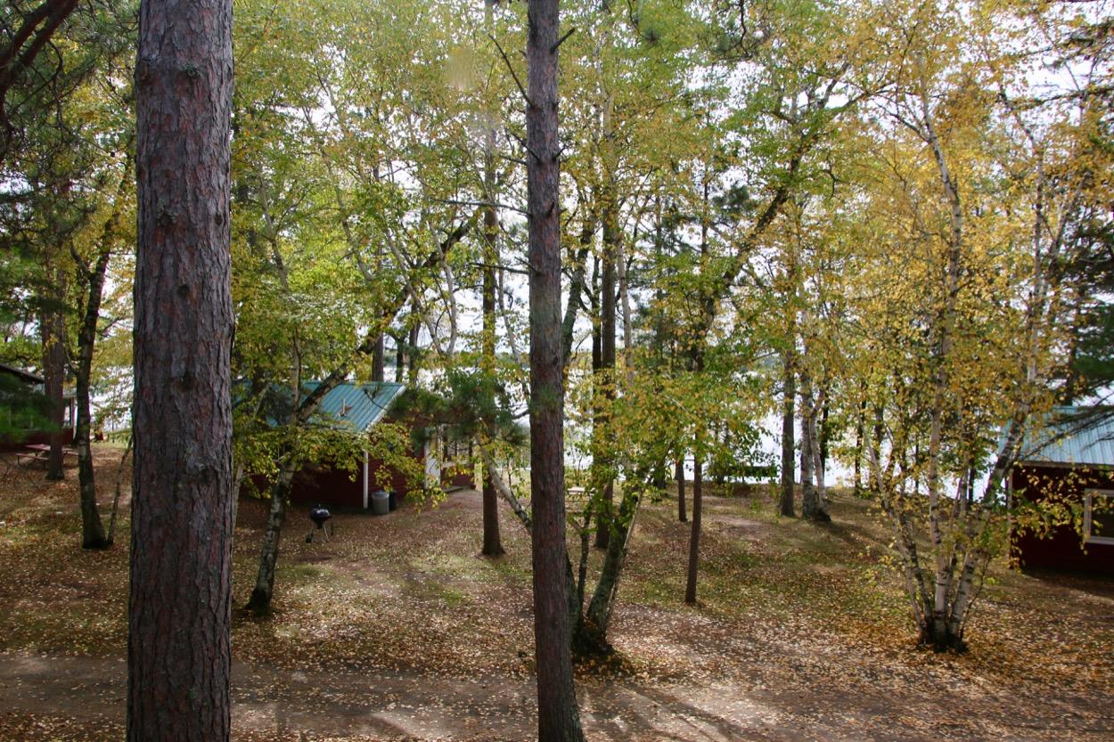 trees MN lake resort for sale