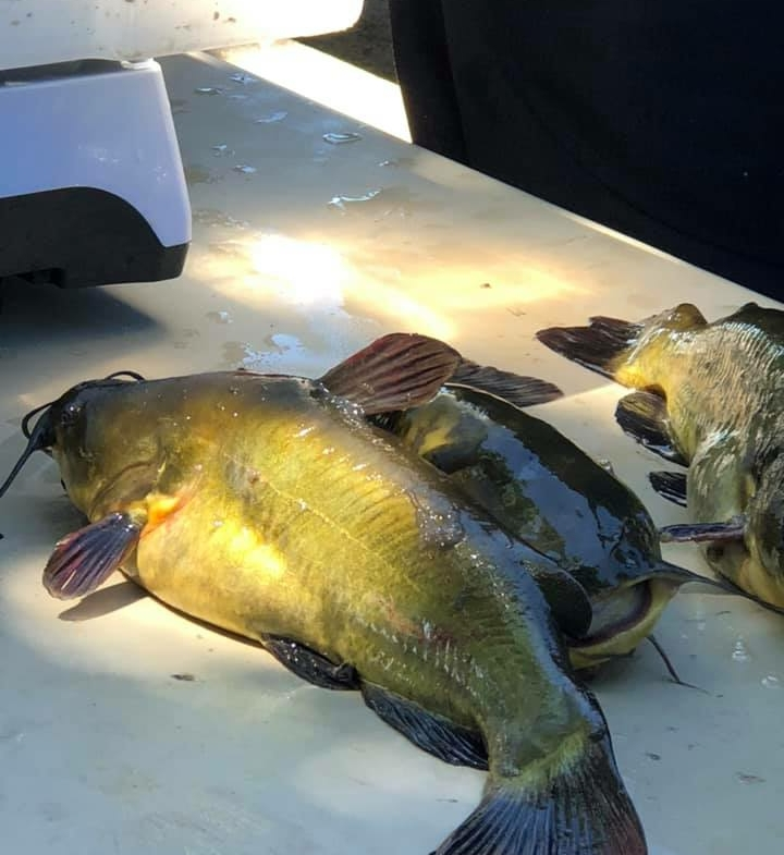 fishing at a MN campground for sale